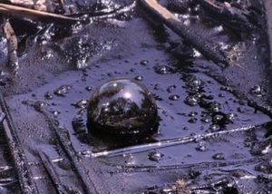 Общее понятие об экологических преступлениях